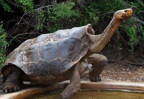 Он спас свой вид! 100-летний самец Диего, ставший отцом 800 черепах, возвращается на свободу