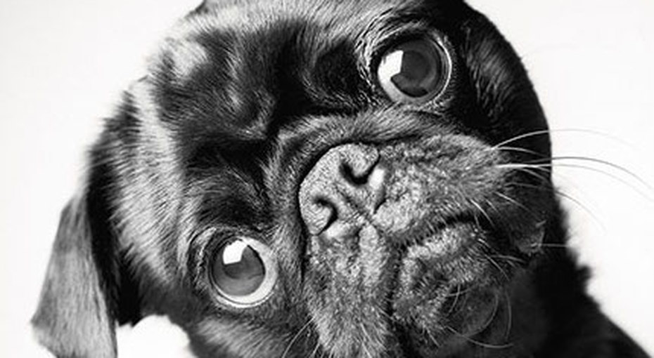 Как стареют собаки: трогательный фотопроект