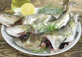 Как избавиться от запаха тины при приготовлении речной рыбы: готовим налима