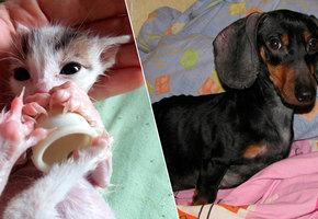 Волшебное преображение: 12 историй собак и кошек, которых подобрали на улице