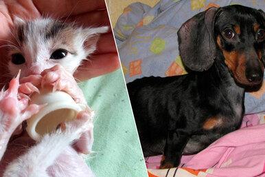 Волшебное преображение: 12 историй собак икошек, которых подобрали наулице