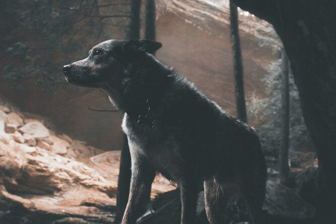 «Стоял грязный ихудой»: исследователи пещер случайно нашли пропавшего пса