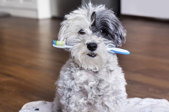 Стоматологическая клиника взяла наработу пса-дантиста. Сним никому нестрашно!