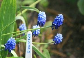 Запоминайте, где - что посадили: садовые маркеры своими руками
