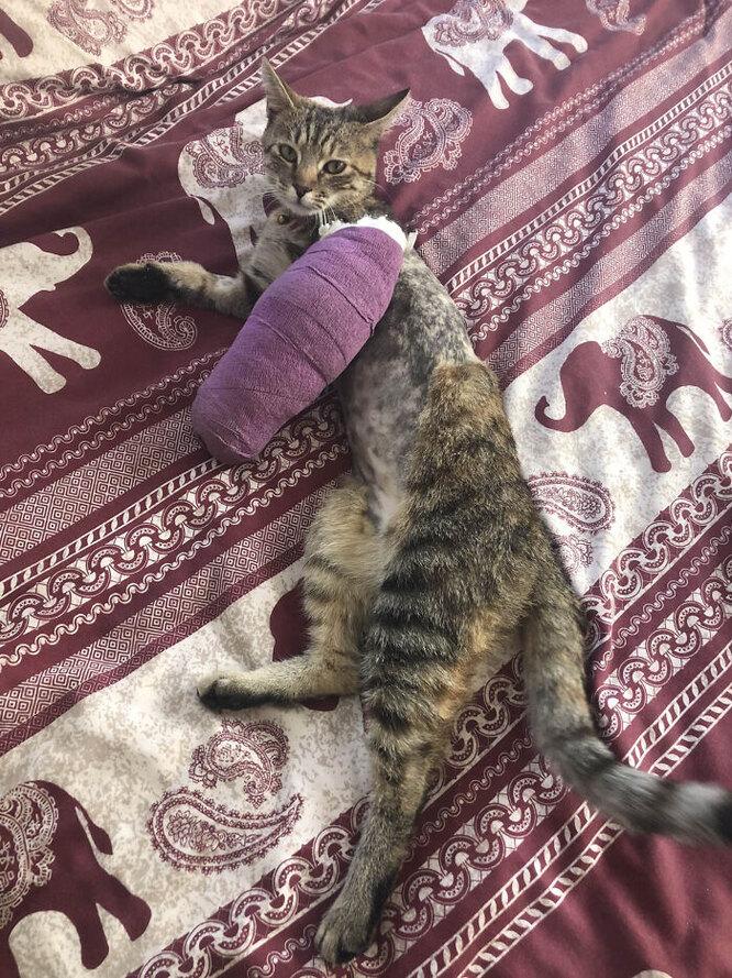 кошка путешественница, кошка эйми