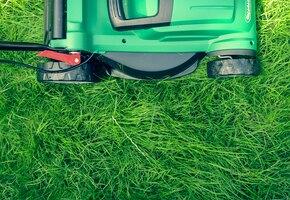 Восстанавливаем газон: 5 самых распространенных проблем и их решение