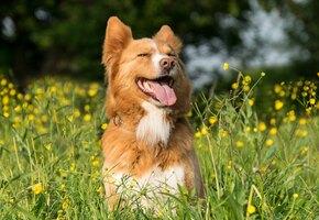 Осторожно, цветы! Как помочь собаке с аллергией на пыльцу