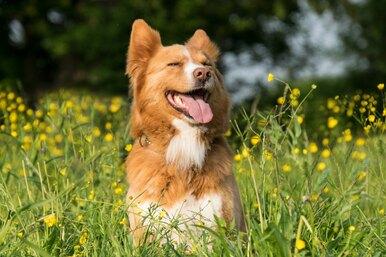 Осторожно, цветы! Как помочь собаке саллергией напыльцу
