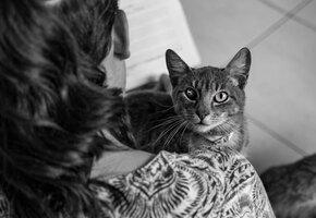 Обязательность, терпение и тяжёлая работа: изнанка работы приюта для животных