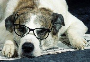 Собаку научили помогать хозяйке-школьнице с