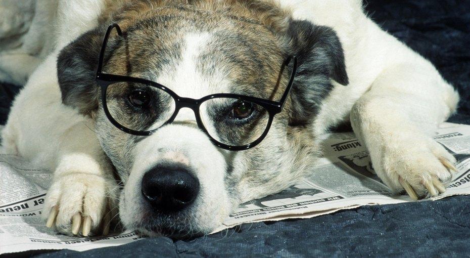 Собаку научили помогать хозяйке-школьнице с«домашкой»