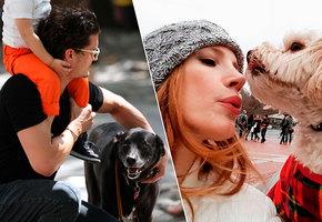 Звезды, взявшие собак из приюта: 7 историй, которые растопят ваше сердце