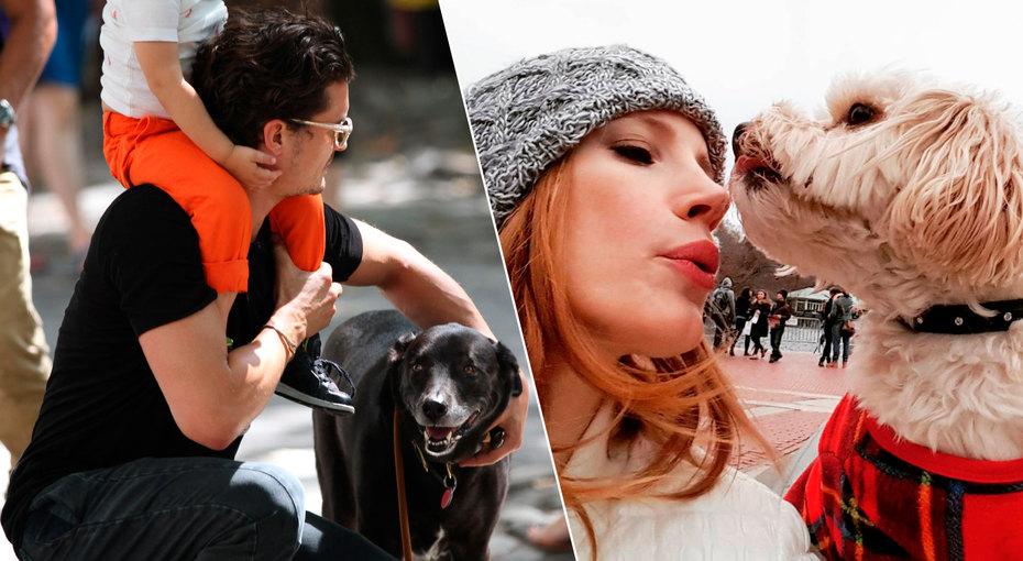 Звезды, взявшие собак изприюта: 7 историй, которые растопят ваше сердце