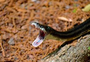 Змеи: как себя вести при встрече, что делать, если укусила