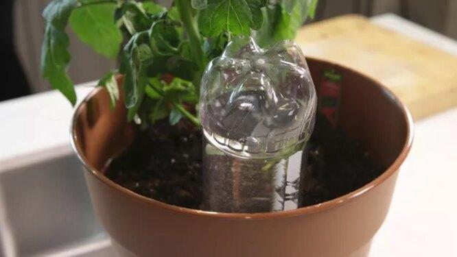 капельный полив, комнатные растения