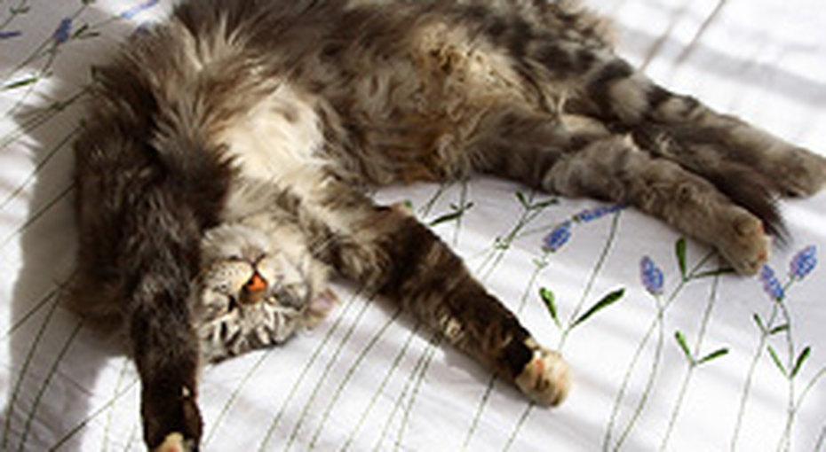 Кошек лучше непускать вспальню