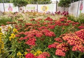 Фестиваль садов и цветов Moscow Flower Show ждет гостей онлайн с 26 июня