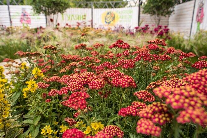 Фестиваль садов ицветов Moscow Flower Show ждет гостей онлайн с26 июня