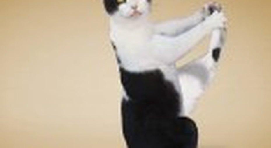 Коты научат йоге