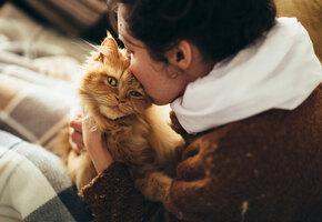 Кошачьи нежности: кошки каких пород больше всех привязываются к хозяину