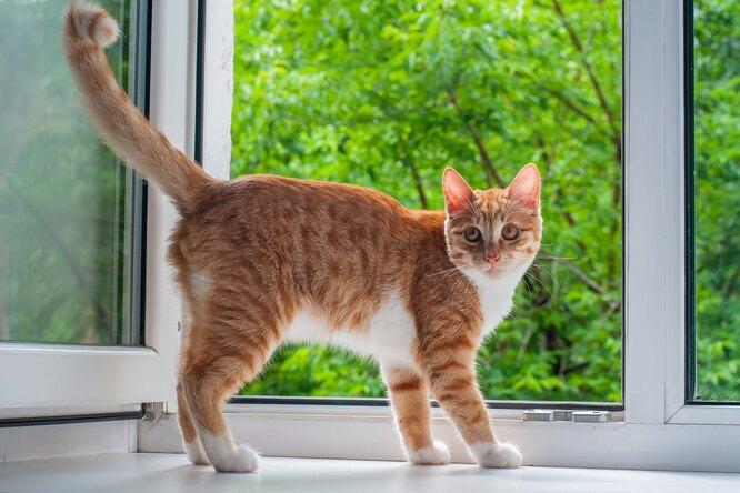 Кошки иоткрытые окна: как защитить питомца влетнюю жару