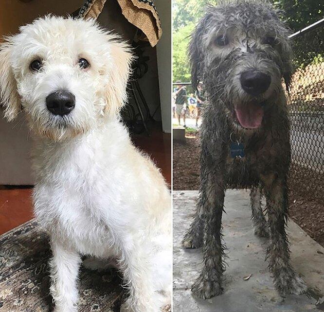 собака в грязи