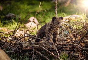 Мама-медведица привела пятерых медвежат на детскую площадку (видео)