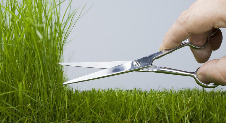 Идеальный газон сейчас, а нечерез 100 лет - реально