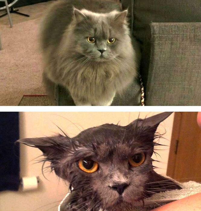 До мытья / После мытья
