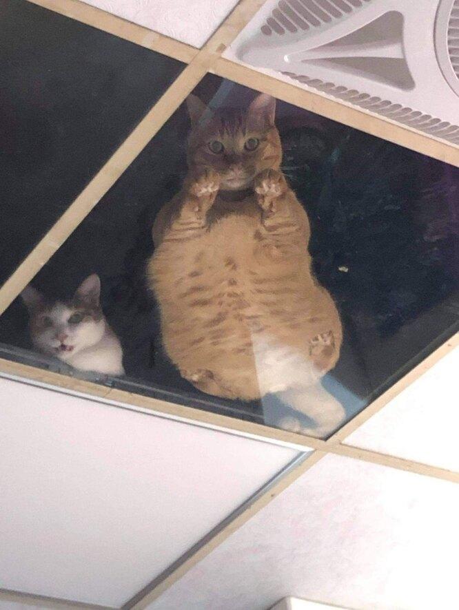 котонаблюдение, коты, котики, кошки