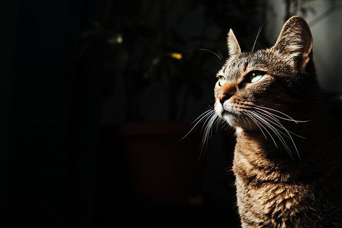 как кошки видят ночью