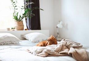 Англичанки меняют трусики раз в пять дней, а постельное белье —  раз в год