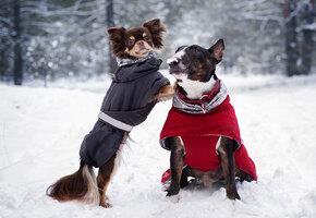 Милые ботиночки и попоны для собак: советы и выбор редакции