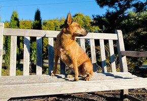 Хозяин бросил пса в парке, привязав его в скамейке. А рядом оставил записку…