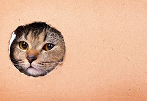 Преодолел страх: сантехник-фелинофоб вызволил кошку из западни и завел друга