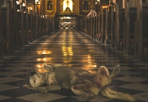 Божьи твари: бразильский священник превратил церковь в собачий приют