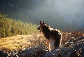Парень купил хижину в лесу, чтобы у любимого пса была достойная пенсия