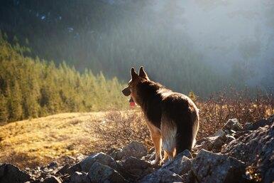 Парень купил хижину влесу, чтобы улюбимого пса была достойная пенсия