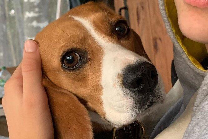 «Говорят, что рак»: Ксения Алферова показала любимую собаку после операции