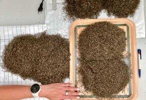 Удчная охота: норвежка собрала ведро комаров