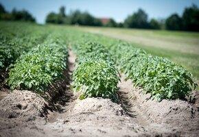 Кольцо не всевластия: на картофельном поле нашлось украшение, потерянное более тридцати лет назад