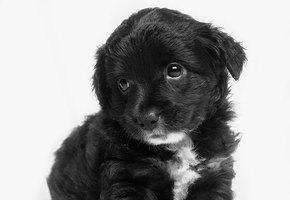 Приютский щенок научился улыбаться — и это помогло ему найти новый дом