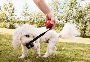 10 классных товаров, которые облегчат жизнь владельцам кошек и собак