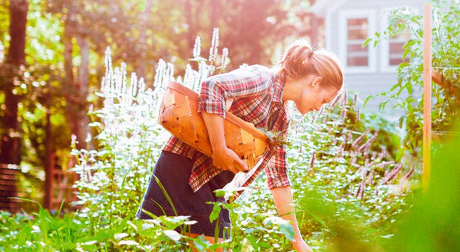 Огород длязанятой хозяйки: как все успеть надаче?