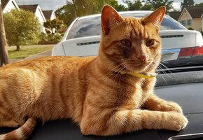 Кот сбежал из дома и прошел 40 км, чтобы вернуться в родную деревню