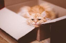 Один дома: сколько времени ваш кот может провести безвас