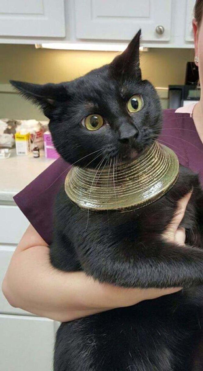 Египетская мода кошкам к лицу