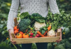 От мешка до термошкафа: в чём сохранить овощи, если нет погреба