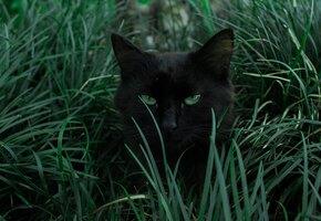 Найди кота! Пользователи Инстаграма разыскивают питомца на загадочном фото