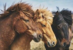 Банда диких лошадей оставила туристов в шоке, умилении и без съестного